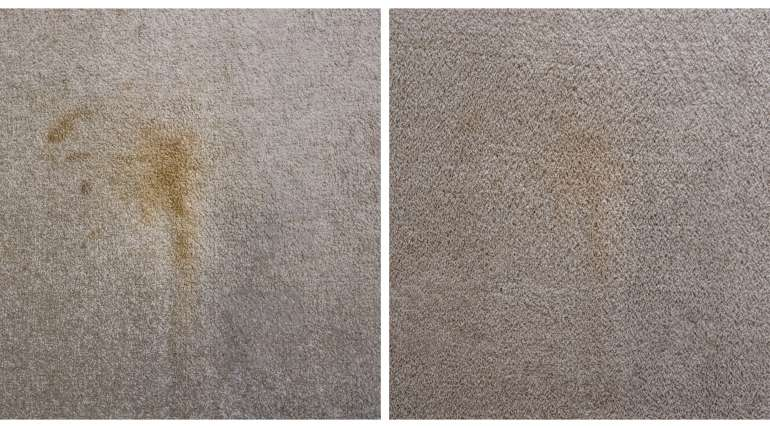 What's Hiding In Your Carpet?
