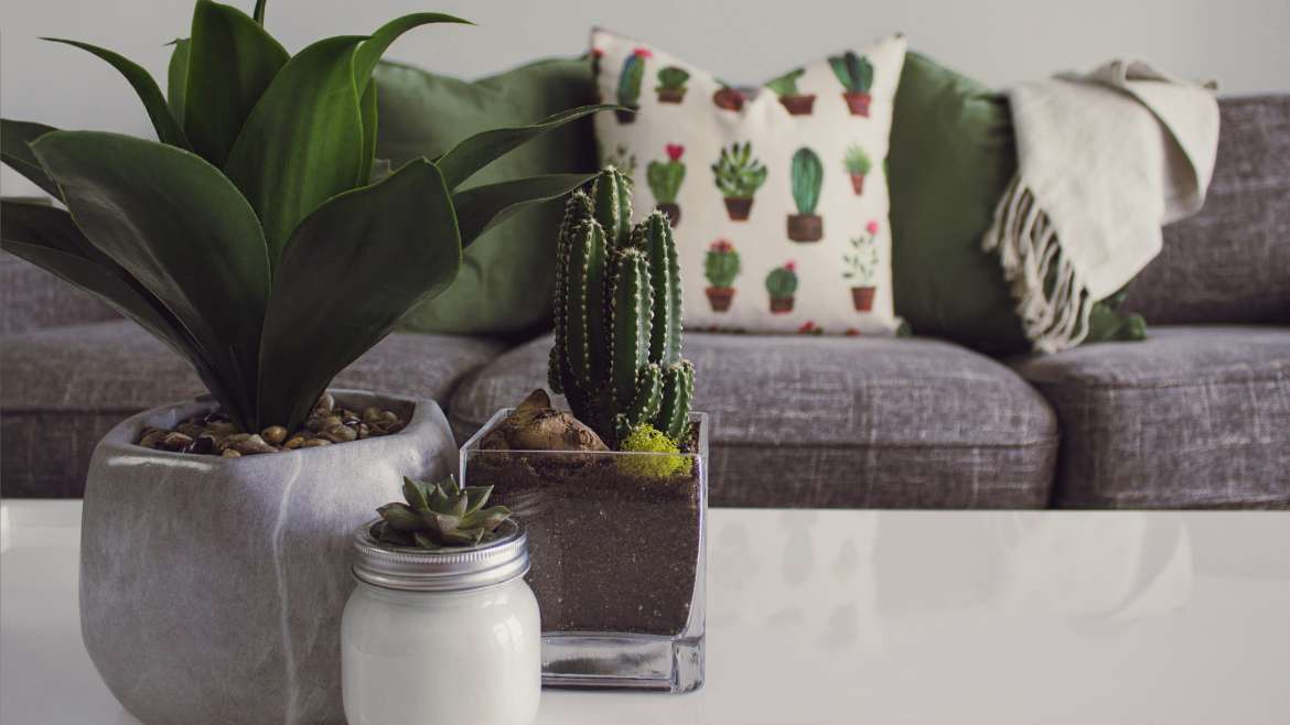 Protecting Your Upholstery